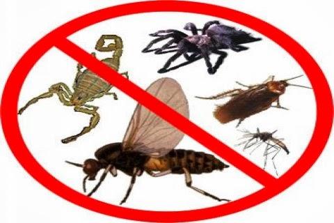 وداعا صرصور! تعلمي كيف تتخلصين من الحشرات