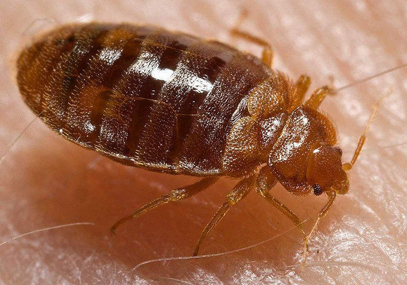 شركات مكافحة حشرات بالمدينة المنورة